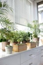 decors-irish-decoration-tips-houseplants-potted-plant-window