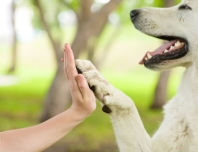 the-language-of-paws-how-dogs-use-their-paws-to-communicate-535e3f4e32674